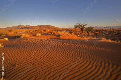 Fototapeta Late afternoon sun on sand dunes