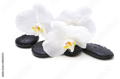 Spa white orchid with massage stones on white