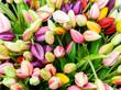 Verschiedene bunte Tulpen - 180637777