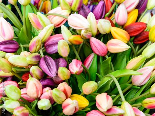 Fotobehang Tulpen Verschiedene bunte Tulpen
