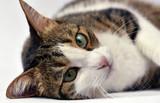 Portrait of adorable kitten close up - 180642526