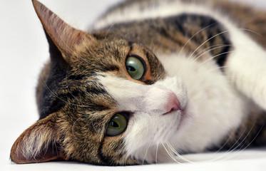 Portrait of adorable kitten close up