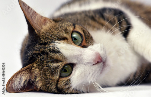 Portrait of adorable kitten close up Poster