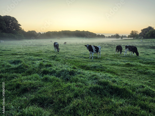 Staande foto Beige Early Autumn countryside morning,Northern Ireland