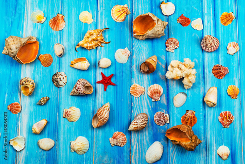 various sea shells on a blue wooden background