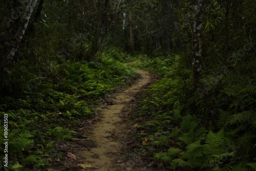 Staande foto Weg in bos Sentier Randonnée