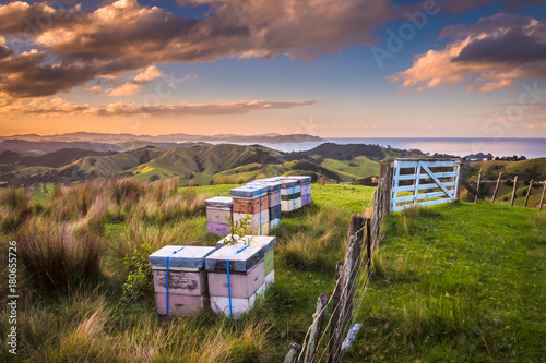 Poster Heuvel Vintage colored Bee Hives on Top of a Hill in Bay of Islands New Zealand