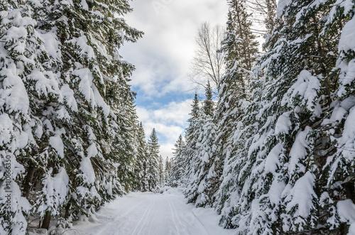 Papiers peints Canada Winter forest