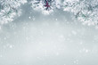 Winter background, falling snow on pine tree copy space