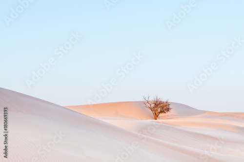 Foto op Canvas Abu Dhabi Dead tree in desert