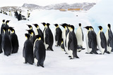 The colony of Imperial penguins stands in the snow near the Iceberg. Shooting from the air. Sunny day. Antarctic. - 180671987