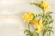 Quadro Spring design template with yellow freesia flowers and copy spac