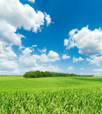 white clouds in blue sky and green grass field