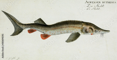 Illustration of a fish. - 180694595