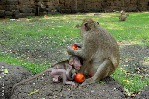 Fotobehang Aap monkey with baby