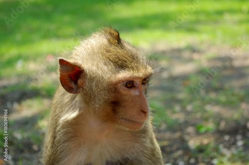 Aluminium Aap monkey head
