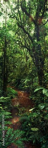 Fototapeta jungle