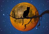 Clair de lune - Chat noir