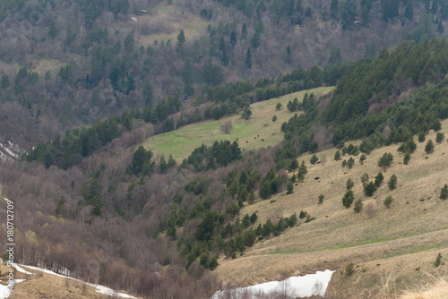 Plexiglas Bison The mountain range of the Big Thach natural park. Adygea