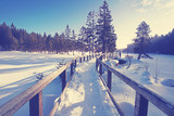 Weg in den Winterwald
