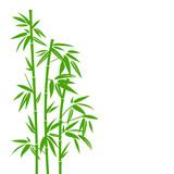 Fototapeta Bedroom - Bamboo Green © Jan Engel