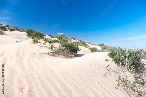 Fotobehang Wit Green shrub plant in the sandy desert