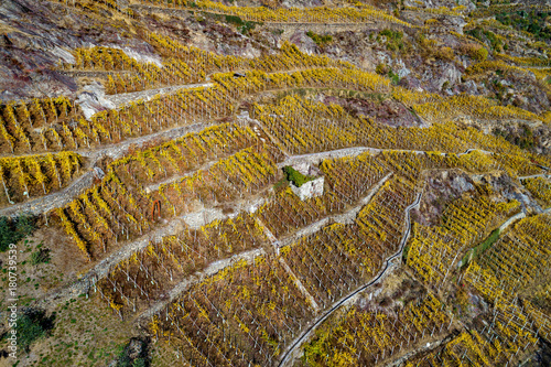 Fotobehang Wijngaard Valtellina (IT) - Vigneti in autunno