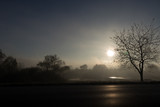 Tree silhouettes in the foggy morning sunlight - 180749558
