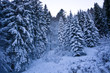 The white forest with soft snow