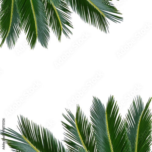 tropical palm sammer frame - 180755126