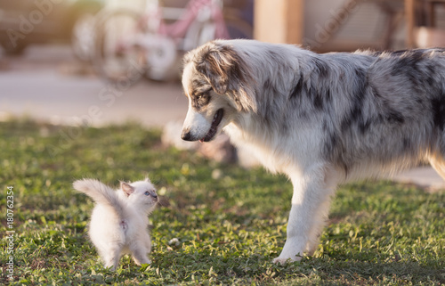 Cute kitten and dog Poster