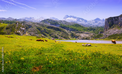 Foto op Canvas Bergen Summer landscape with lake