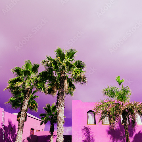 Fotobehang Purper Palms. Tropical location. Travel Minimal
