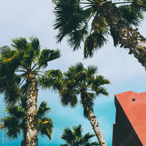 Aluminium Canarische Eilanden Palms. Tropical location. Travel Minimal fashion