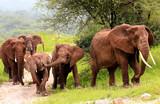 Group of elephants in Tangariro NP