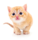 Kitten on white background. - 180784936