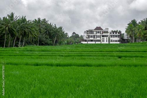 Fotobehang Groene Green field rice terrace at Bali, Indonesia