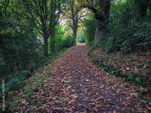 Papiers peints Cappuccino Early Autumn countryside morning,Northern Ireland