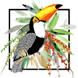 toucan bird and tropical plant - 180815180