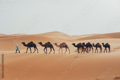 Staande foto Afrika Caravan going through the sand dunes in the Sahara Desert, Morocco