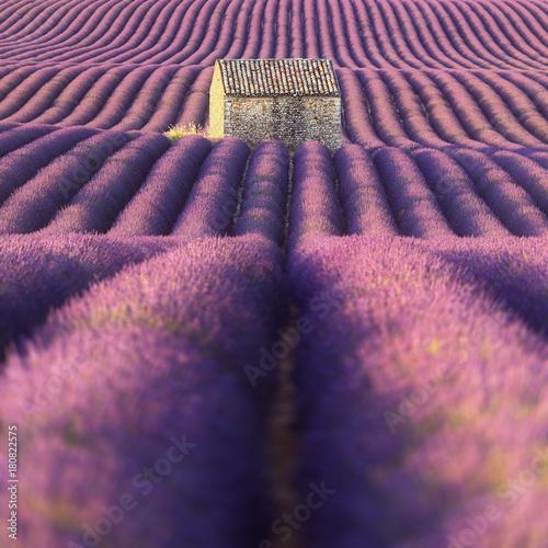 Tuinposter Lavendel Champ de lavande et cabanon. Provence, France