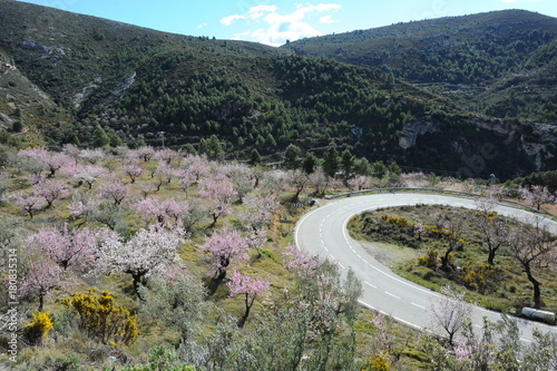 Aluminium Khaki Mandelblüte in Spanien