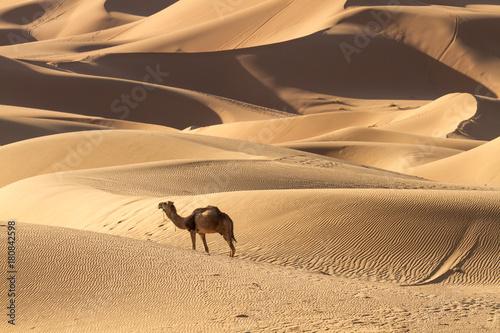 Fotobehang Marokko Sahara