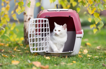 White cat in plastic carrier in park