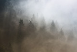 Beautiful morning foggy conifer forest landscape. Picture was taken in Slovenia, EU. - 180850969