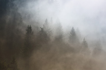 Beautiful morning foggy conifer forest landscape. Picture was taken in Slovenia, EU.
