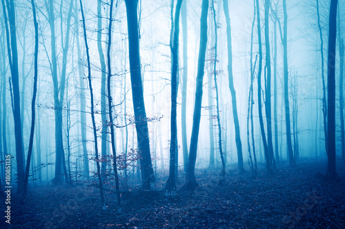 Fototapeta Dark blue colored foggy forest tree landscape. Color filter effect used.
