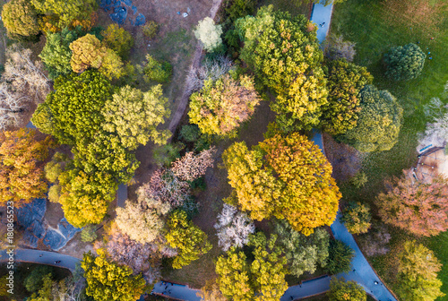 Foto op Aluminium Herfst Aerial view of a park in autumn