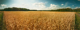 Panoramic landscape with golden wheat field. Agricultural background