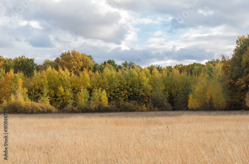 Autumn landscape in a meadow with a forest view